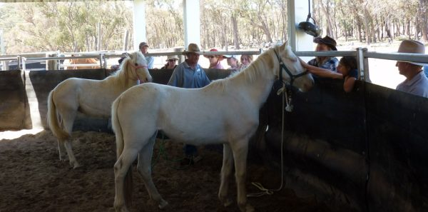 Open Day at New England Brumby Sanctuary